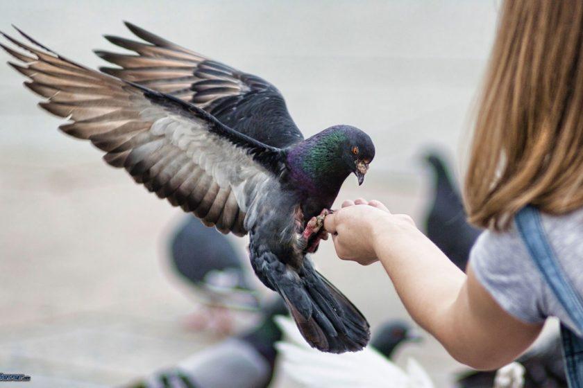 valencia piccioni
